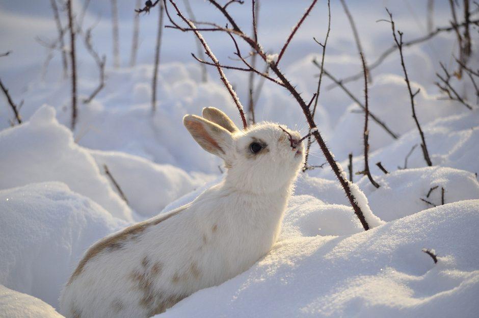 S. Paltanavičius: kiekvieną žiemą kviečiame įsirengti gamtos televizorių