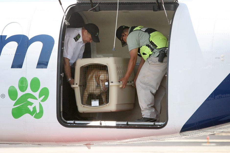 Netikėtumas: šuniui atidarius bagažo skyrių, lėktuvui teko tūpti avariniu būdu