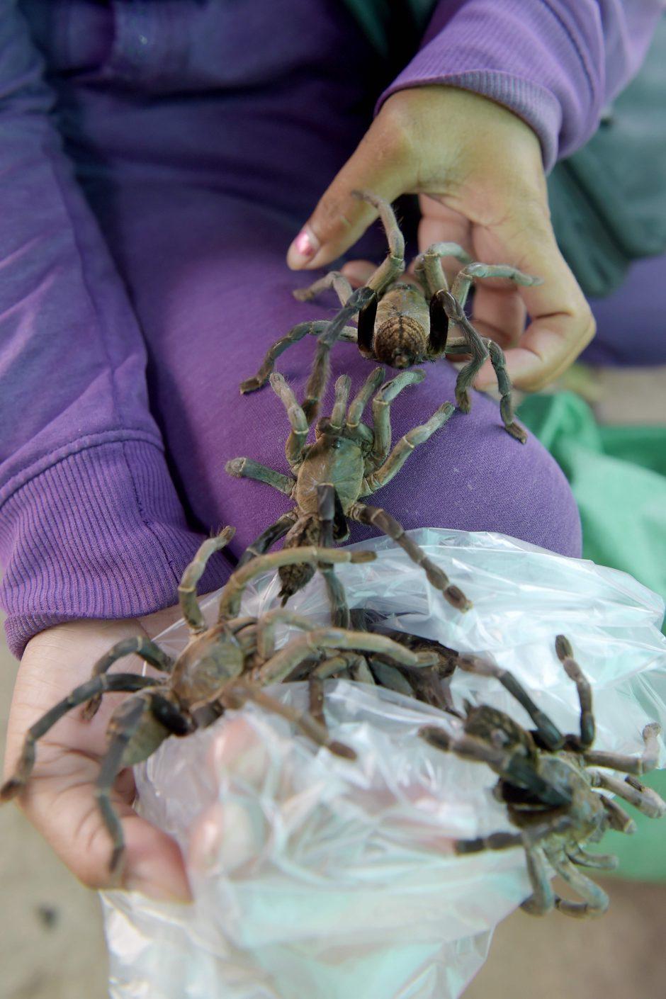 Oro uoste be priežiūros paliktame lagamine aptikti 22 tarantulai