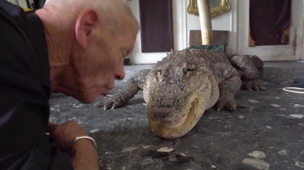Vietoj kačių – aligatoriai