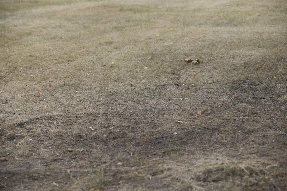 Žemės ūkio ministerija: nė vienas ūkininkas nėra apsidraudęs nuo stichinės sausros
