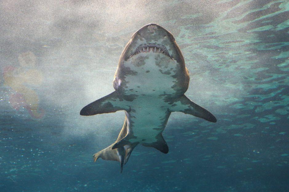 Prie Izraelio krantų knibžda neįprastai daug ryklių