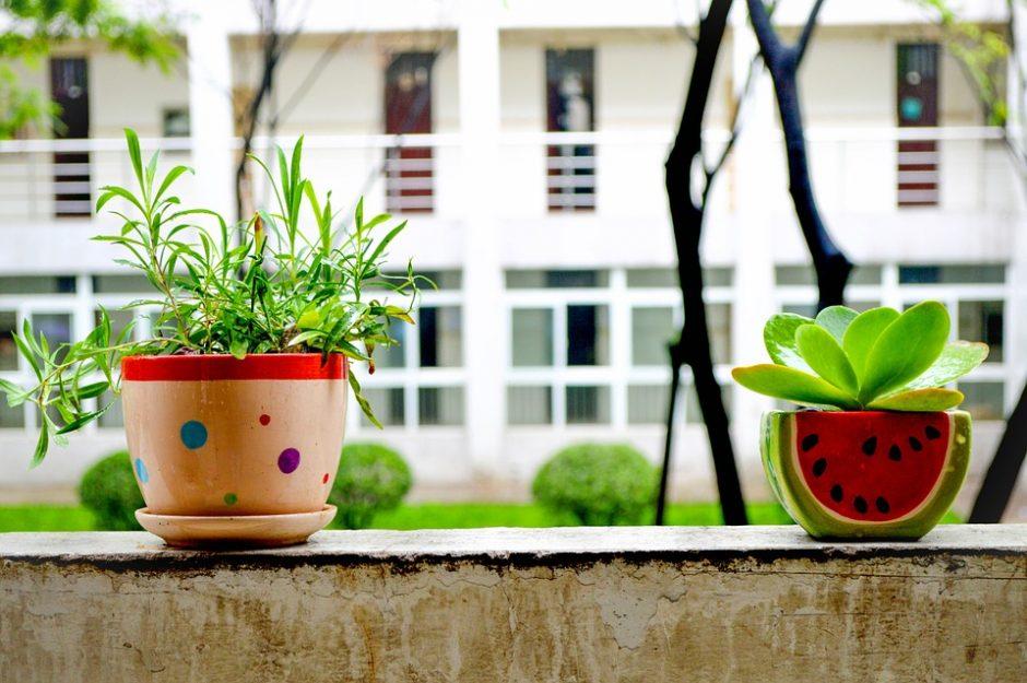 Kaip po žiemos pabudinti kambarinius augalus?