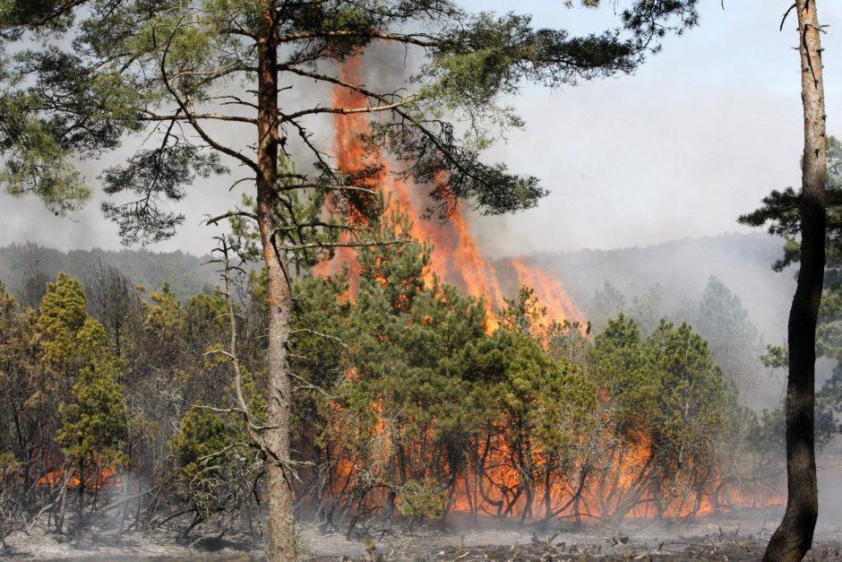 Kauno rajone pleškėjo miškas, įtariamas padegimas