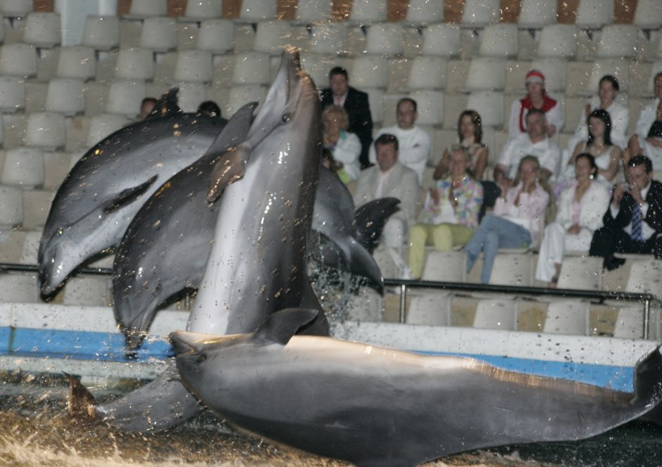 Klaipėdoje delfinų dar teks palaukti