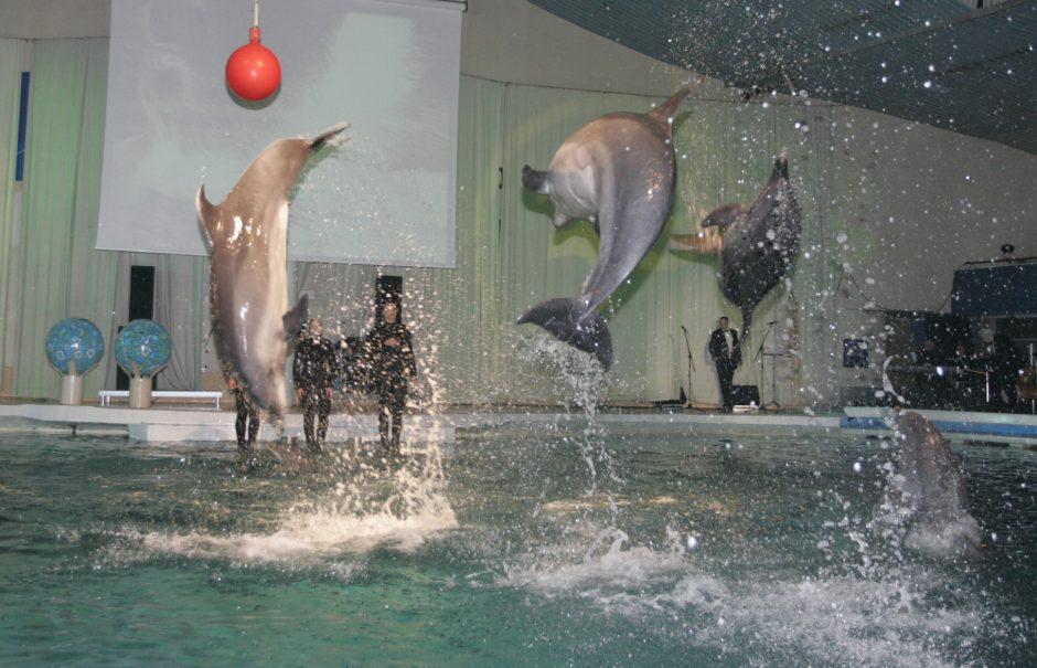Per Kalėdas – delfinų pasirodymai