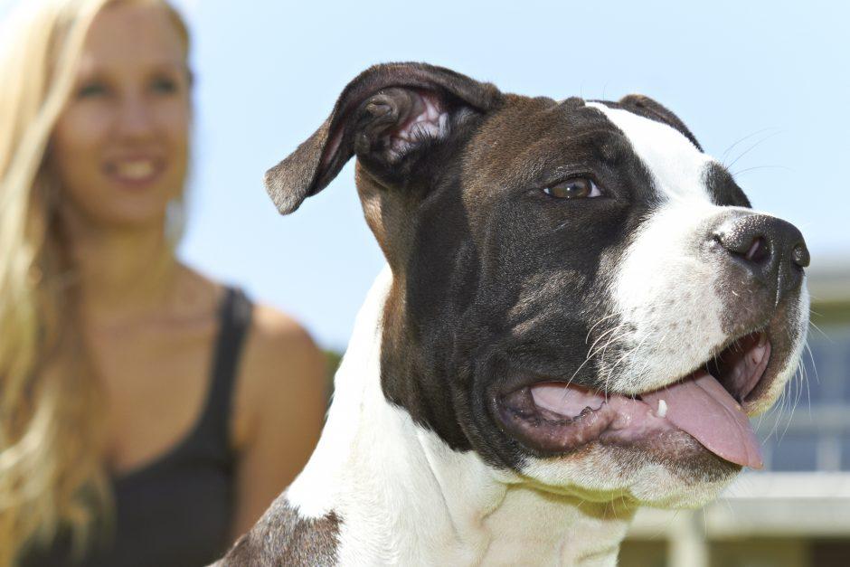 Uostamiestyje – kovinių šunų medžioklė
