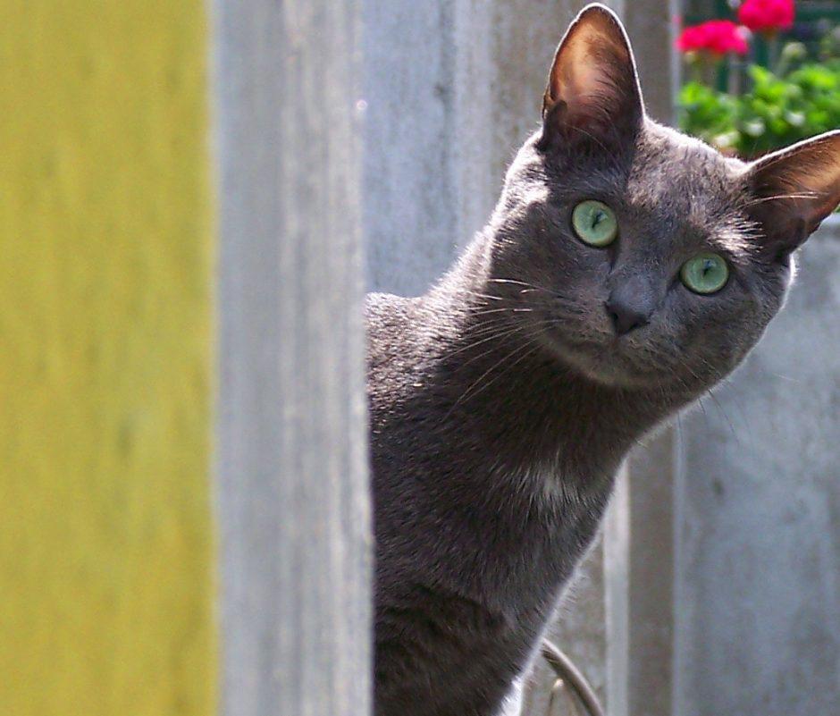Kaimyno katės klaipėdietės gyvenimą pavertė košmaru (per lubas varva jų šlapimas)