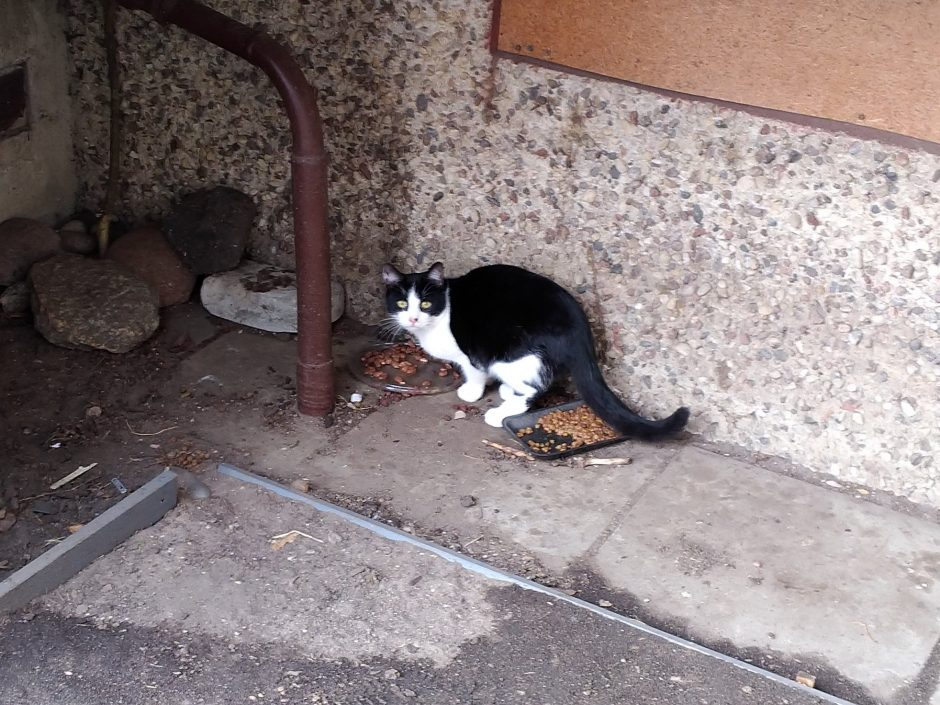 Po balkonais Klaipėdoje – kačių prieglauda