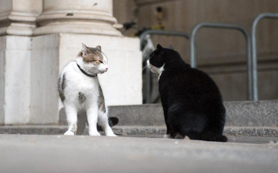 Uždraudė maitinti katinus