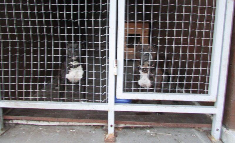 Mašiną tikrinusius muitininkus puolė du kontrabandininkės šunys