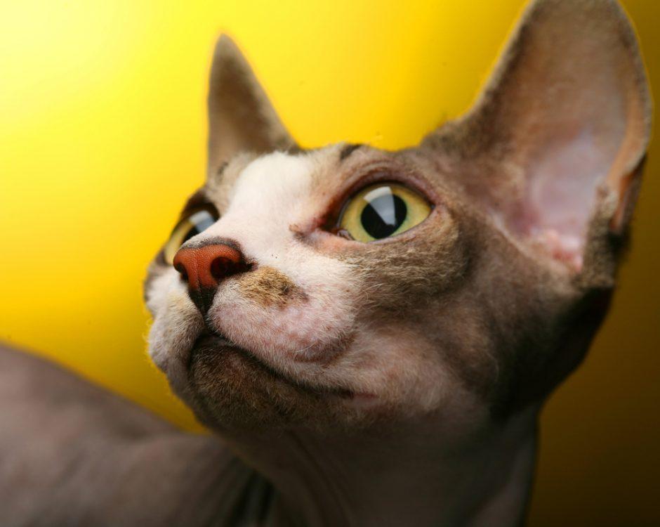 Antstoliai areštavo katiną dėl jo šeimininko skolų