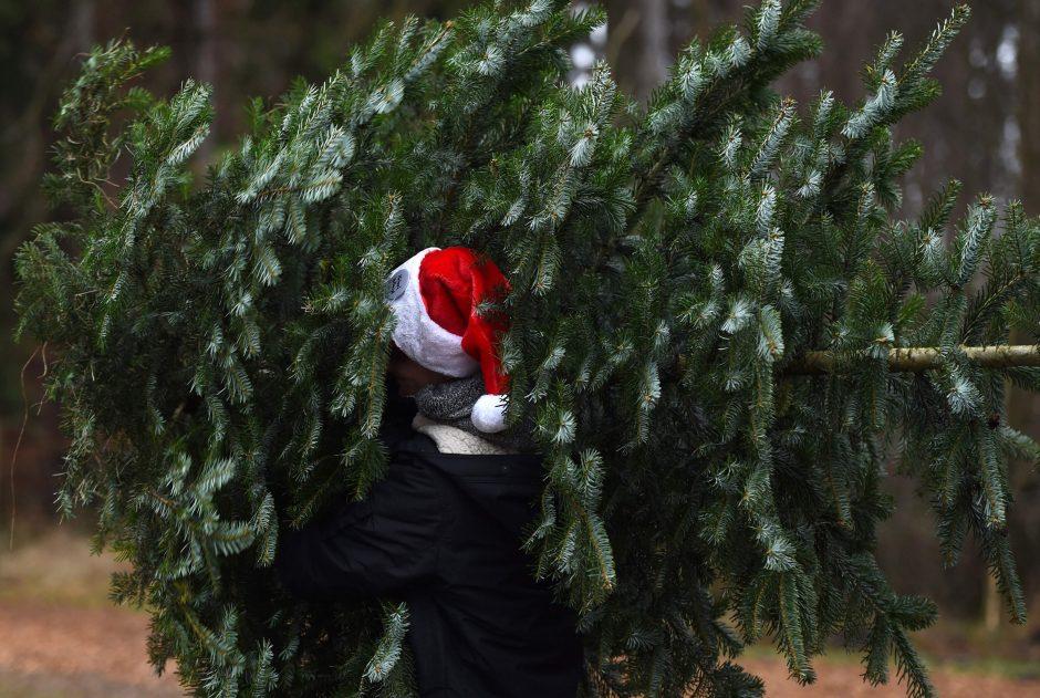 Ohajo geradarys nepasiturintiems gyventojams padovanojo kalėdinių eglučių