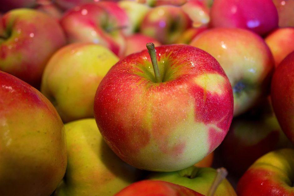 Obuolių derlius gausus, bet niekas nesidžiaugia