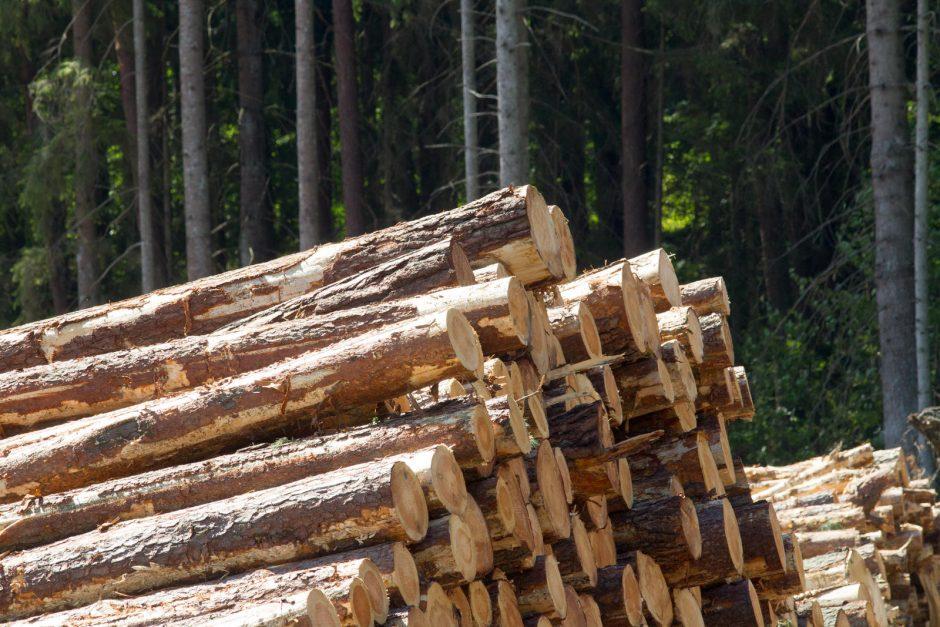 Miškų reforma palanki tik stambiam kapitalui?