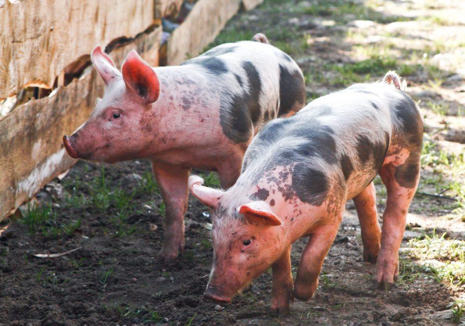 Maisto ir veterinarijos tarnybos vadovas: Lietuva patenka į dvi grėsmės zonas
