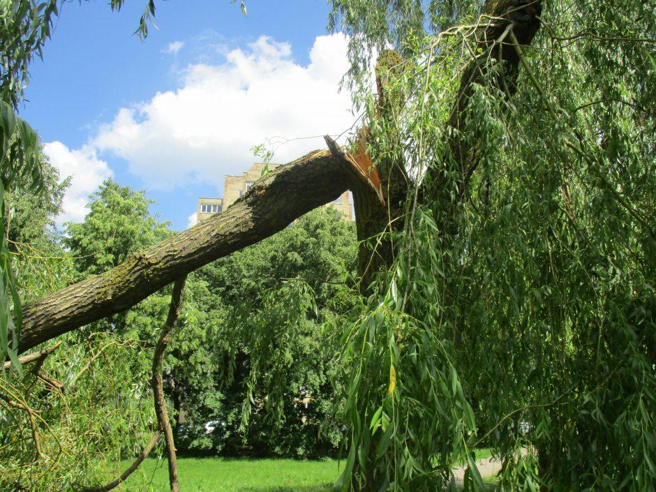 Škvalas nuvertė 13 medžių