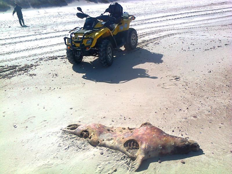 Tarp siūlymų ruoniams apsaugoti – verslinės žvejybos draudimas