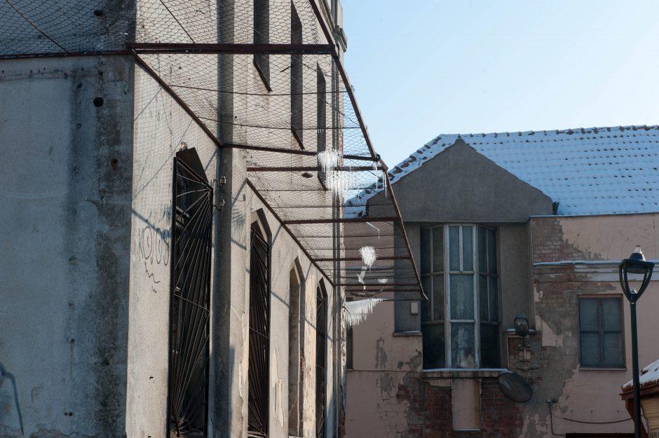 Varvekliai ant žydų ligoninės tinklų