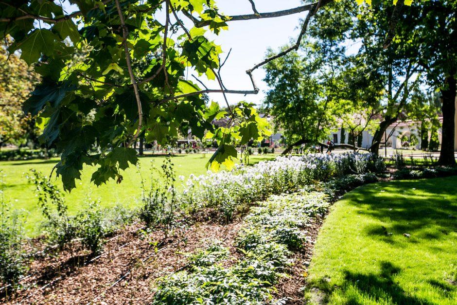 Bernardinų sodui atseikėta 20 milijonų litų