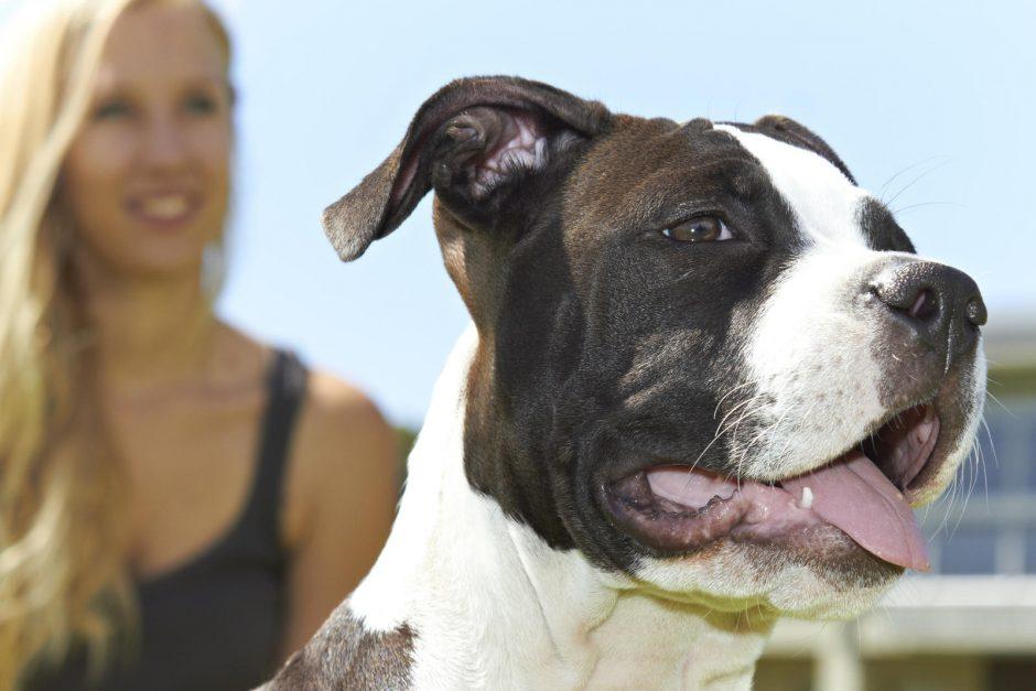 Agresyvius keturkojus auginančių šeimininkų pasiteisinimas: šuo atvyko išsimaudyti