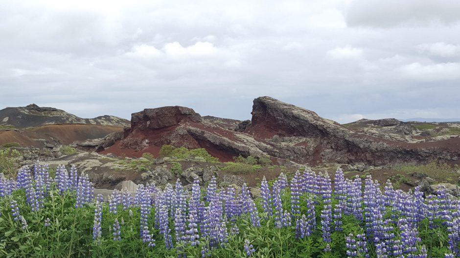 Islandijoje gelbėjo šeimą, bet dabar grįžti neketina