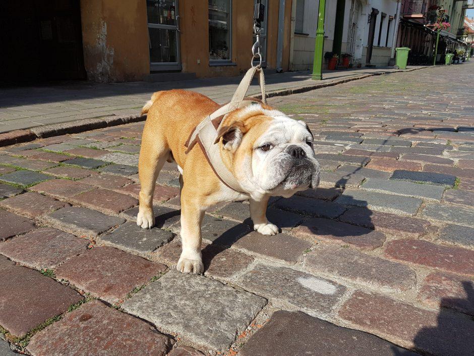 Vasarą šunų tyko pavojai: ką pataria ekspertai?