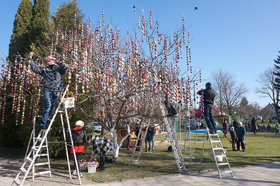 Pažiūrėti didžiausio Velykų medžio Lietuvoje – į Šeduvą