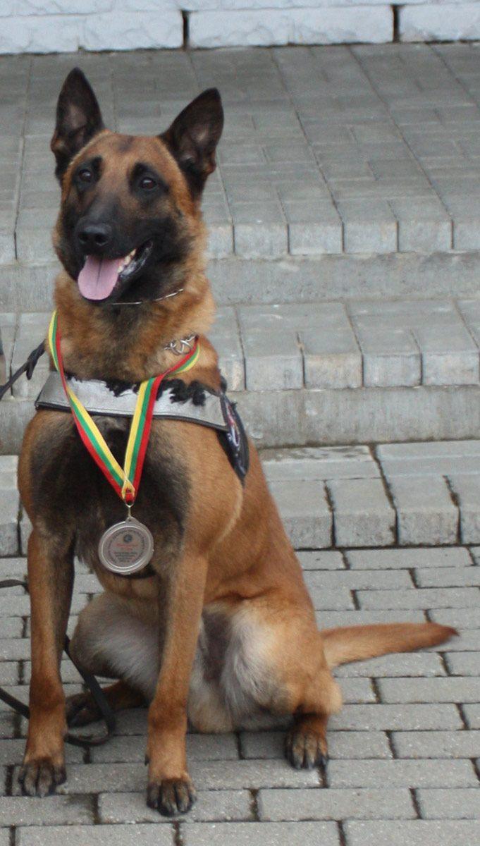 Pasieniečių šunį Ramzį nušovęs A. Komskis turės sumokėti nemenką baudą