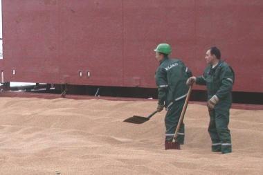 Pabrangę grūdai ir rapsai varo į neviltį biodegalų gamintojus
