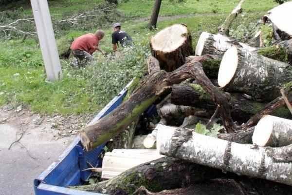 Rugpjūčio pradžioje siautusi audra padidino medienos paklausos ir pasiūlos problemą