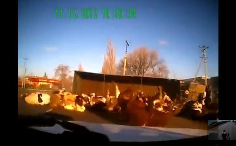 Vaizdo siužete užfiksuota karves gabenusio vilkiko avarija