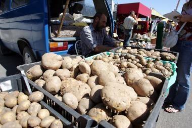 Dalis Lietuvos bulvių augintojų tikisi užsidirbti Rusijoje