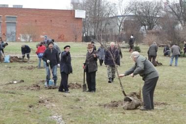 Klaipėdiečiai mieste pasodino medelių