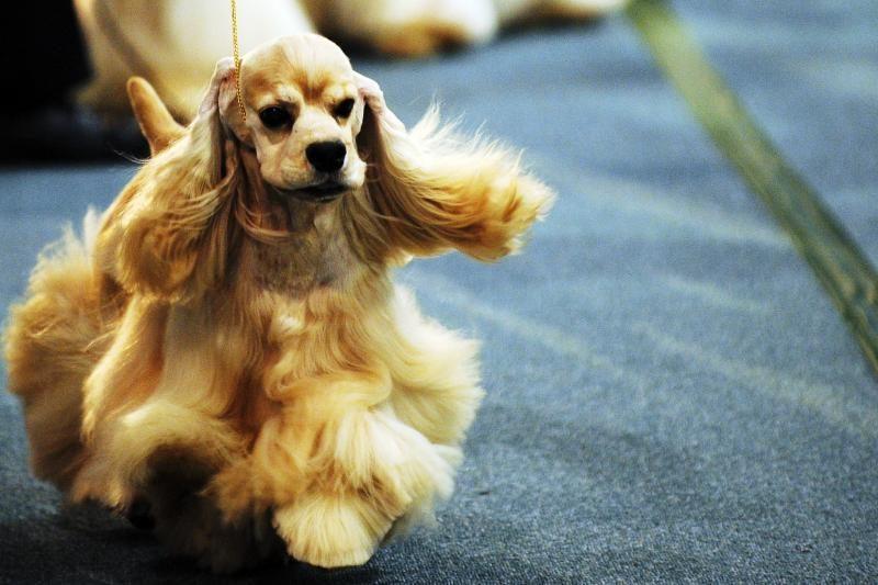 Pigus šuo iš neaiškaus veislyno - už melą bausti negalima