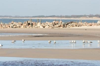 Gelbėtojų rūpestis – vaikai paplūdimiuose