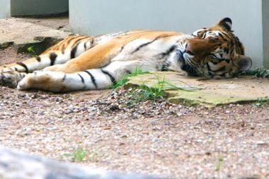 Kauno choro laimėti pinigai pasiekė Zoologijos sodą