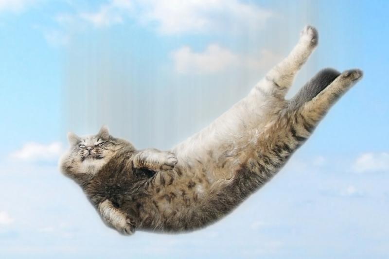 """Internetą užkariauja kačių poezijos rinkinys """"Galėčiau tai apšlapinti"""""""