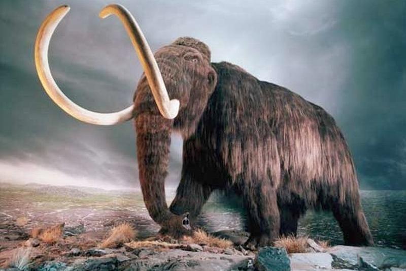 Netoli Paryžiaus aptikti beveik visi mamuto griaučių kaulai