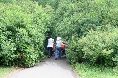 Poilsio parkas tapo mišku