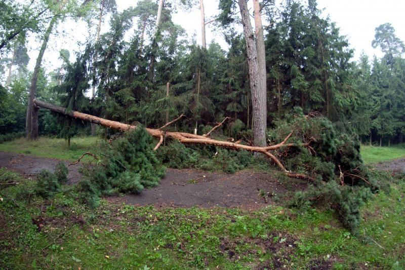 ERGO: savaitgalio audros nuostoliai – 500 tūkst. litų