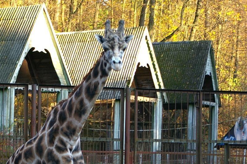 Ar Lietuvos zoologijos sode nešąla gyvūnai?