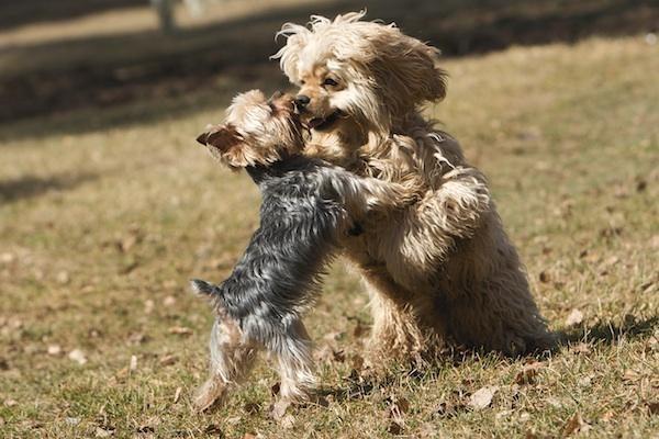 Ar reikalingas kaimynų sutikimas norint laikyti šunį?