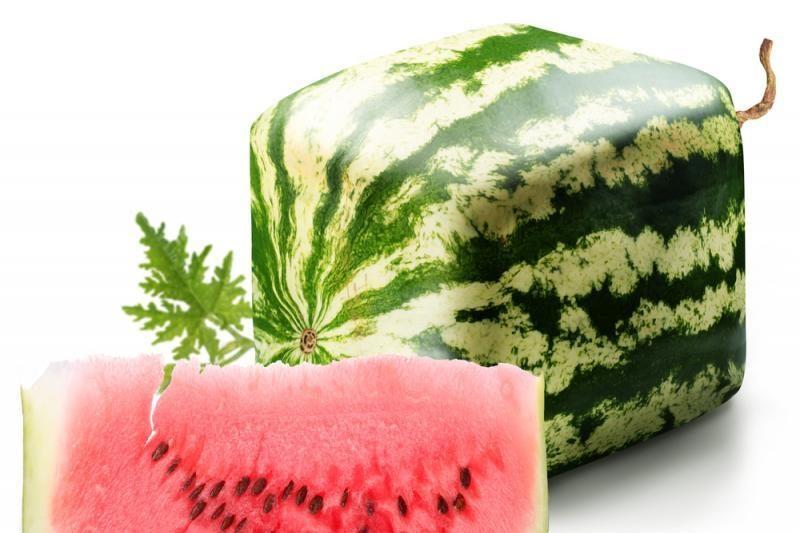 Kodėl japonai sugalvojo auginti kubo formos arbūzus?