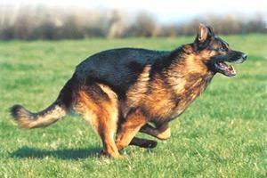 Šuo rado be žinios dingusį senolį