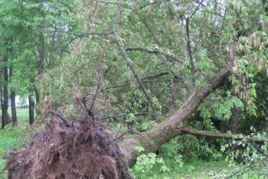 Vėtra Kaune išvartė medžius