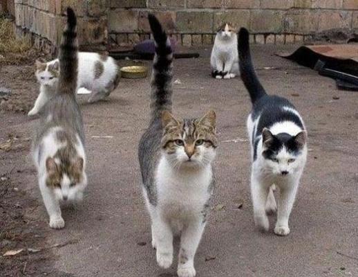 Benamius gyvūnus Klaipėdoje sterilizuos rumunai