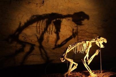 Dėl priešistorinių gyvūnų išnykimo kalti žmonės