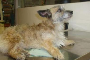 Šunį nuo tilto numetęs įtariamasis - jau policijos žinioje