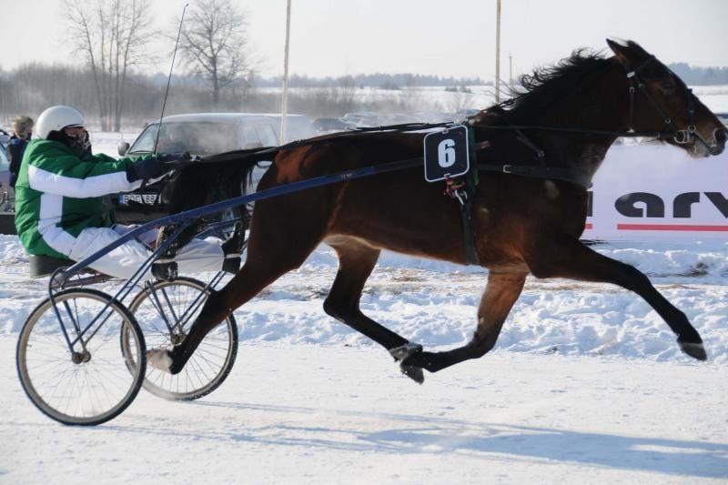 Organizatoriai įtemptai ruošiasi Sartų žirgų lenktynėms